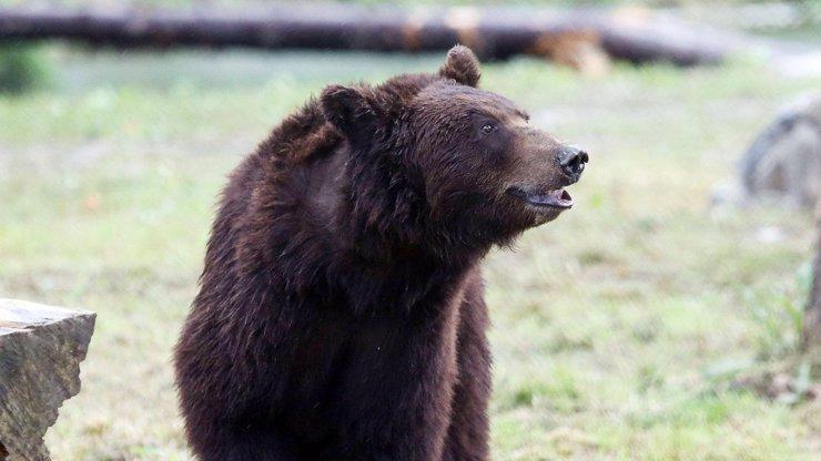 220 let tu nebyl, ale nyní je zpět! V Krkonoších se objevil medvěd