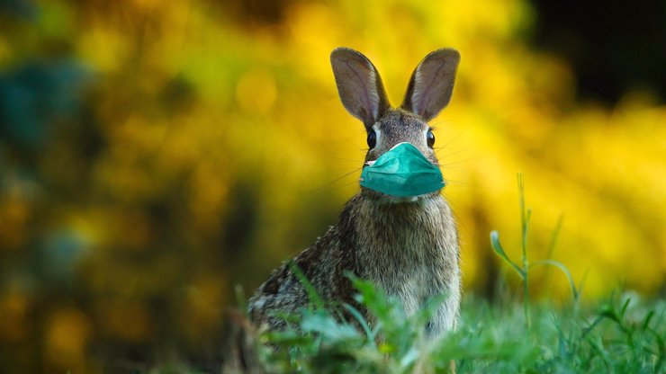 Počasí na covidové Velikonoce: Meteoroložka prozradila, jestli alespoň bude svítit slunce