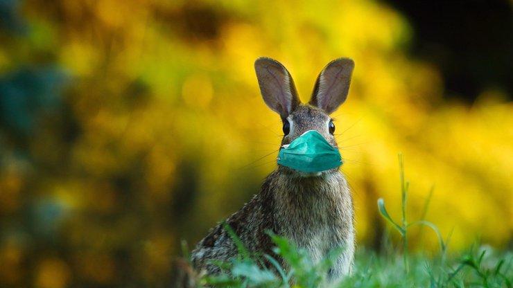 Velký přehled nařízení o Velikonocích: Omezení pohybu, žádná pomlázka a zavřené obchody