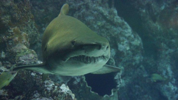 Čecha usmrtil žralok. Kdo je skutečným viníkem?