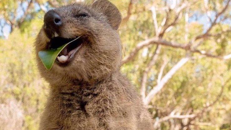 Úsměv v době koronaviru: 15 snímků nejveselejšího zvířátka na světě vám zvedne náladu