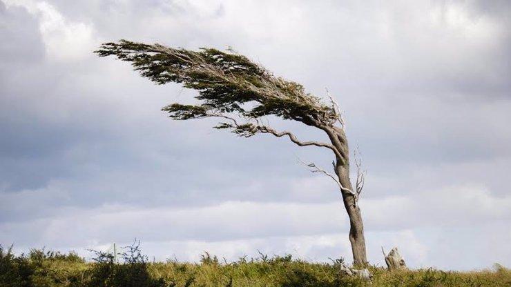 V neděli Česko ohrozí silný vítr! Meteorologové varují před velkými škodami!