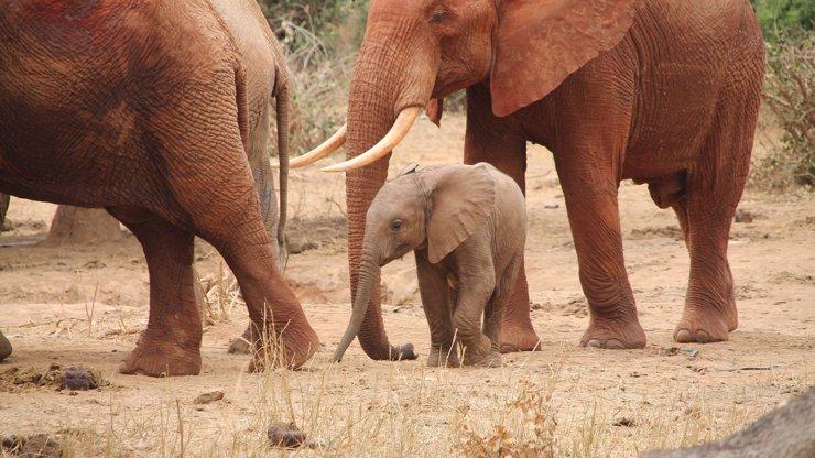 Dostal, co si zasloužil: Brutálně zabil přes 500 slonů. Za utrpení zvířat stráví muž 30 let ve vězení