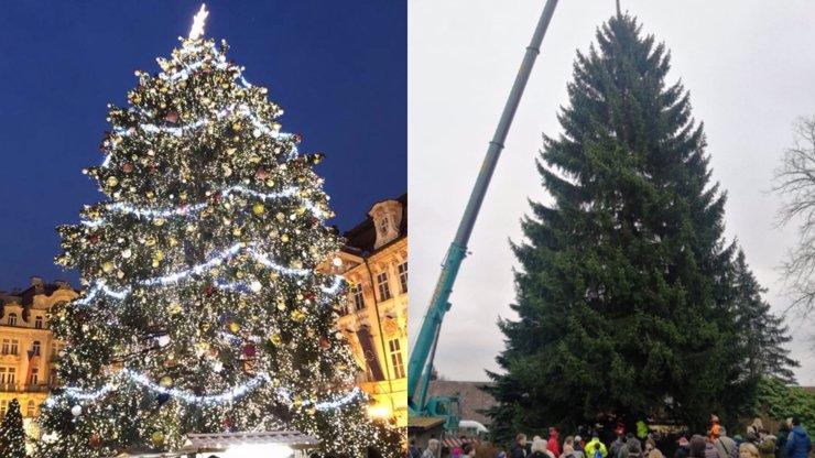 Vánoční stromek pro Prahu byl pokácen: Staromák bude zdobit 24 metrů vysoký smrk