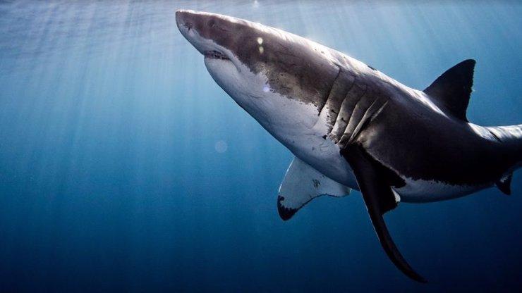 Nejočekávanější letní speciál se žraloky v srpnu na Discovery