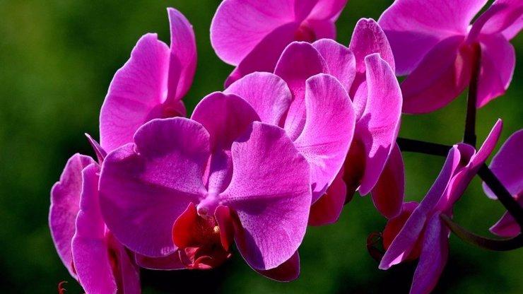 Květinový horoskop, část II.: Jaká květina vám přísluší podle data narození a co prozrazuje o vaší osobnosti?