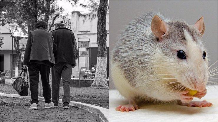 Dívka (16) chtěla otrávit prarodiče jedem na krysy: Nepustili ji na Matějskou pouť