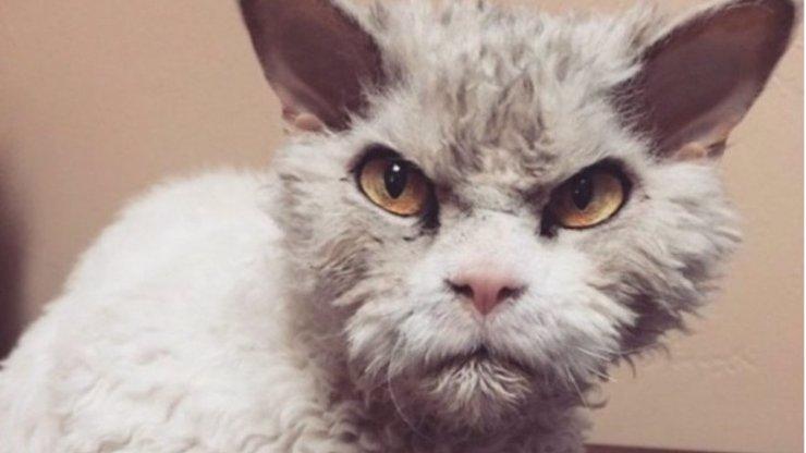 Koronavirem se nakazila i domácí kočka! Od pondělí je v karanténě