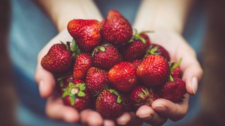 Samosběr jahod v plném proudu, zájem je obrovský: Kolik letos zaplatíte?