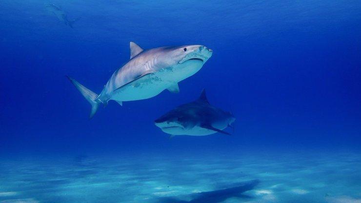 Žraloci se budou přesouvat do Evropy: Útoků na turisty může přibývat, tvrdí odborník Steve Lichtag