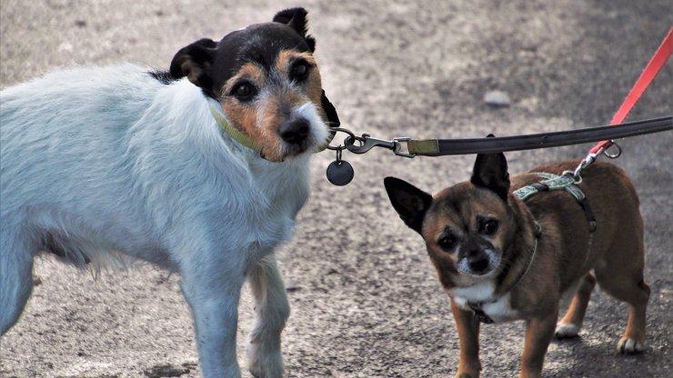 Originální obcházení vládních nařízení: Žena si místo psa vedla na vodítku přítele