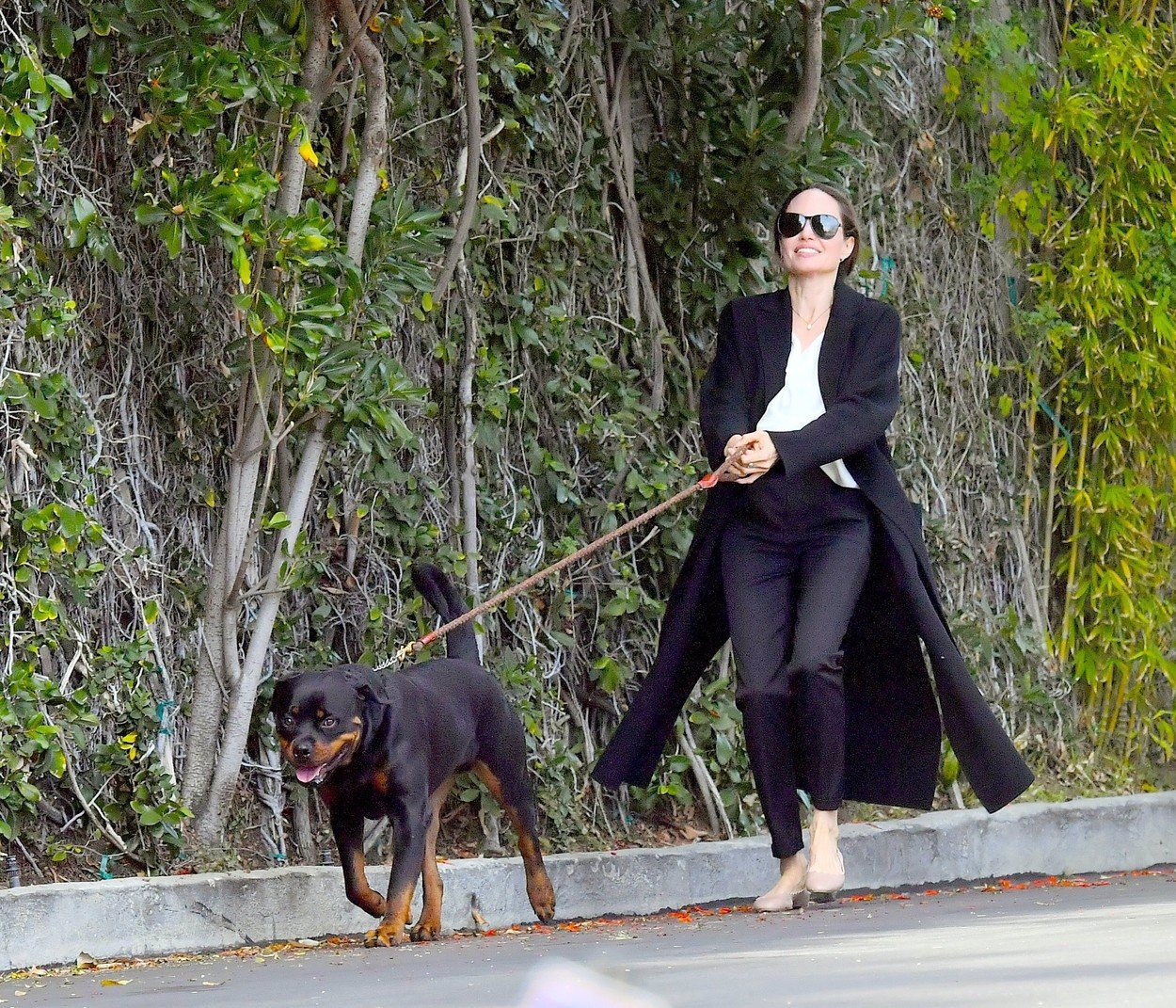 Pes ji málem strhl k zemi: Angelina Jolie chřadne a fanouškům její fotky nahání hrůzu