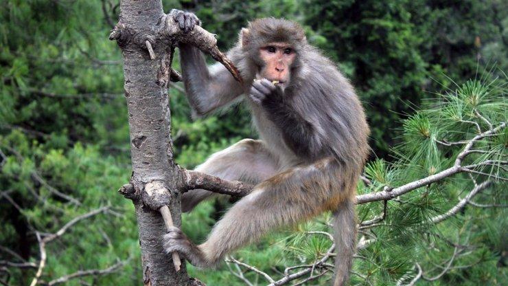 Chtělo by to lepší brýle: Lovec zastřelil ženu, spletl si ji s opicí