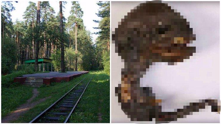 Mutant, nebo mimozemšťan? V Rusku našli dost podivnou mrtvolu malého tvora!