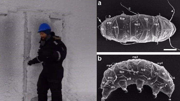 ZÁHADNÝ OBJEV: Našli vědci v Antarktidě mimozemské tvory?