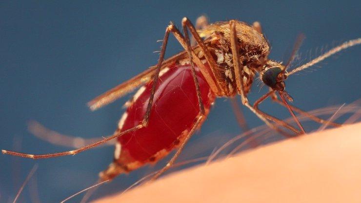 Někoho píchají, na jiného nejdou! Podle čeho si komáři vybírají své oběti?
