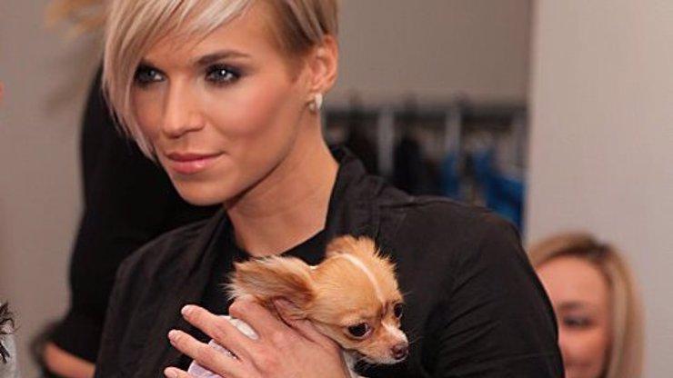 Případ bestiální chovatelky čivav rozčílil Mašlíkovou: Kolik před lety zaplatila, aby její štěně přežilo?