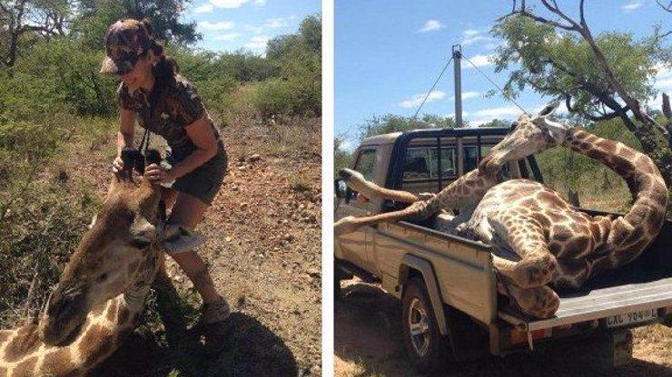 Zabiják v sukni dráždí Česko! Míša popsala do detailu, jak se střílí krásná žirafa