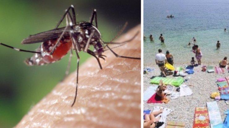 Komáři v chorvatsku.