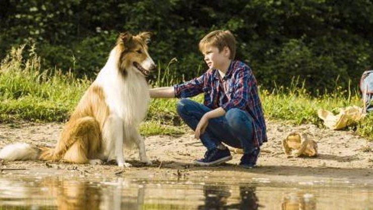 Do kin jde remake filmu Lassie se vrací: Legendární kolie se při natáčení proháněla i Českem