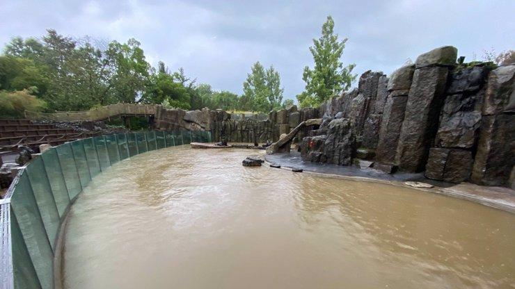 Děsivé záběry ze Zoo Praha: Velká voda zpustošila pavilon tučňáků a vytopila lachtany