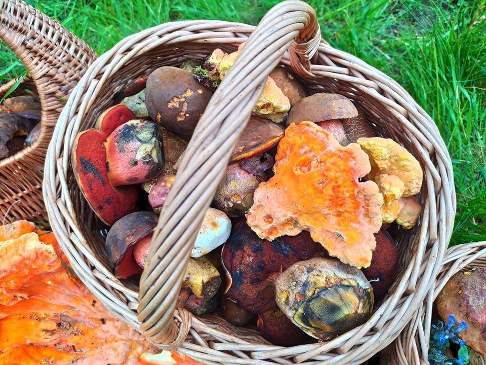 Martin Mňuk sbíral houby pro show MasterChef: V lese si žiji svůj sen