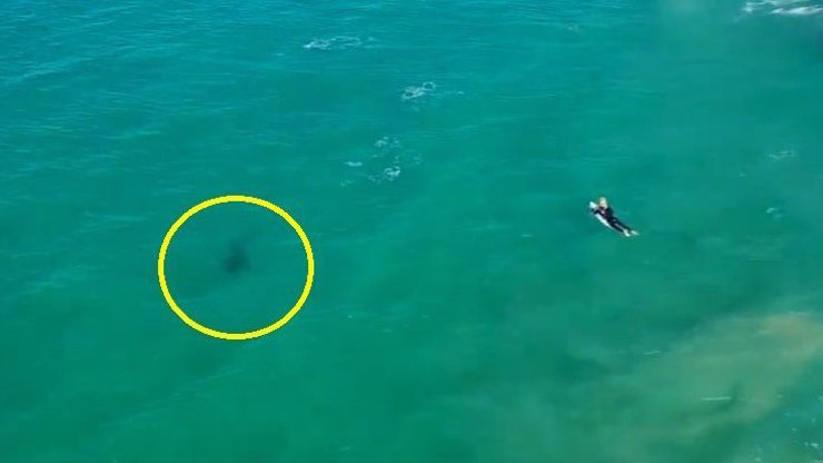 Žralok naštěstí na surfaře nezaútočil.