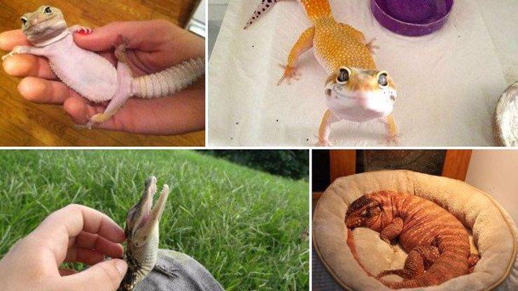 14 skvělých fotek ještěrek a jiných plazů! Nejsou tak chladní, jak se zdají!