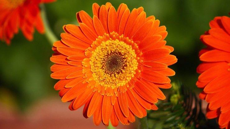 Květinový horoskop, část I.: Jaká květina vám přísluší podle data narození a co prozrazuje o vaší osobnosti?