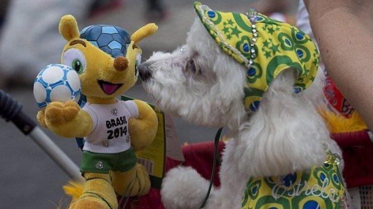 8 fotek z psího karnevalu v Rio de Janeiru: Co všechno jsou schopni blázniví páníčci udělat svým mazlíčkům?
