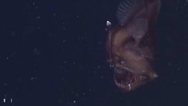 Příjemné sny! Vědci poprvé natočili jednu příšeru z mořských hlubin přímo ve vodě a je to děs!