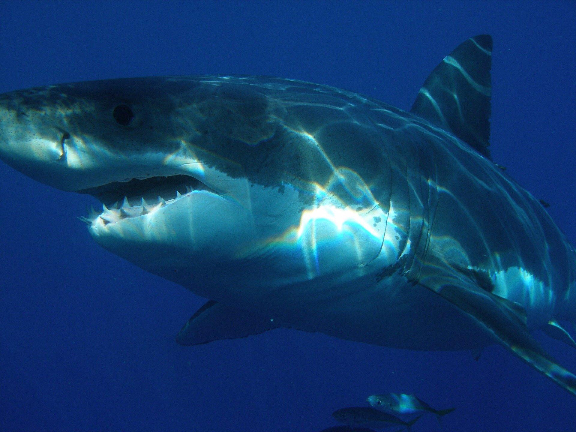 Smrtelný útok krvežíznivého žraloka: Mladíkovi (†17) nebylo pomoci, zraněním podlehl na pláži