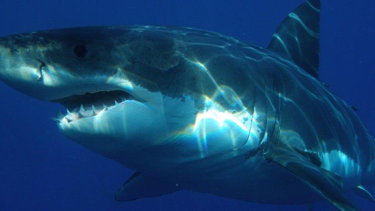 Čelisti v akci: Žralok napadl seniora, ten parybu přepral a hodil na palubu