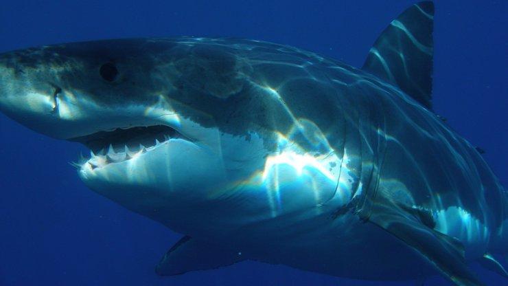 Chlapec při potápění pohlédl do tváře žraloka: Čelistem predátora unikl o vlásek