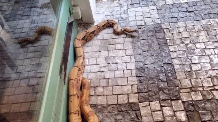 V centru Prahy se plazil dvoumetrový had. Vyděsil kolemjdoucí k smrti