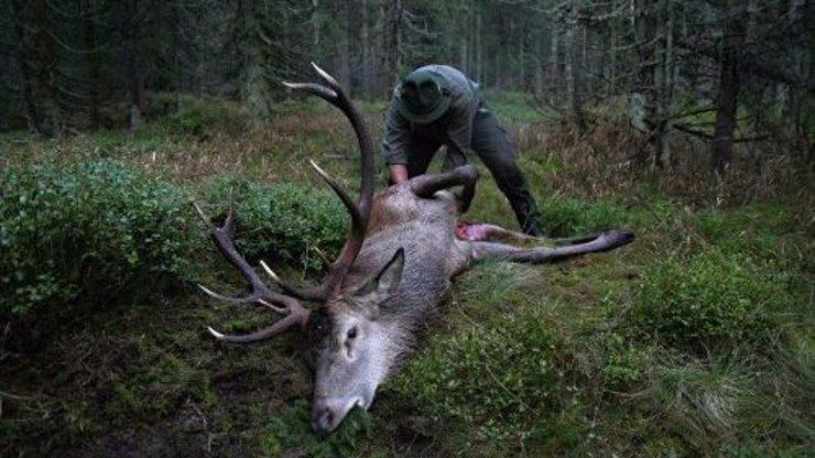 Myslivci šílí! Odporný pytlák na Břeclavsku zabil a znetvořil vzácného zlatého jelena!