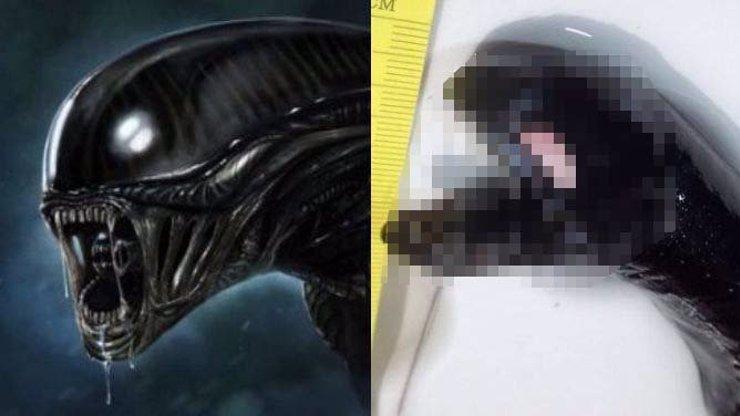 Co to proboha je? U mrtvé velryby našli lidé příšeru z hlubin, která vypadá úplně přesně jako Vetřelec!