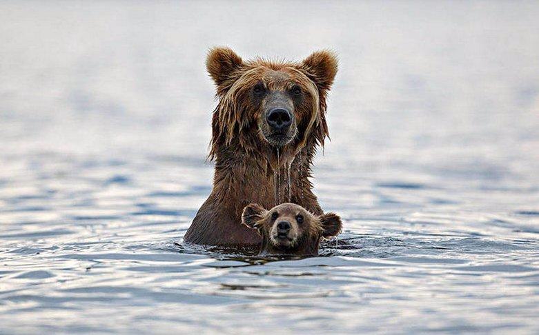 9 fotografií zvířecích mláďat, které dojmou i lidi bez srdce! Starostlivost rodičů nezná mezí!