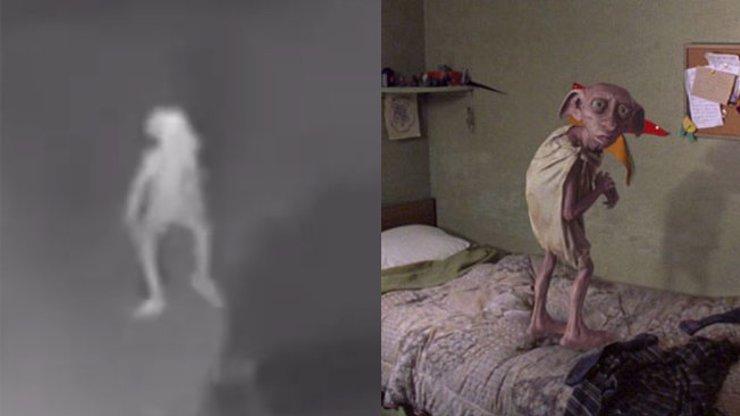 ZÁHADNÉ VIDEO: Kamery natočily podivného tvora, vypadá jako Dobby