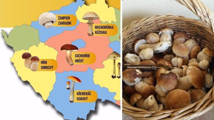 HOUBOVÁ MAPA: Konečně začaly pořádné žně! Kde nyní houbaři nasbírají plné košíky?