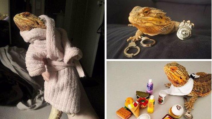 Seznamte se s nejvtipnější ještěrkou ever! Je to rozená modelka a objevila se i v New York Post!