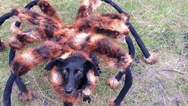Skrytá kamera, ze které byste si nejspíš nadělali do kalhot! Mutant psa a obrovského pavouka útočí!