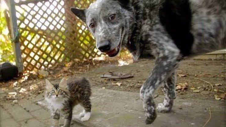 Perfektní dvojka: Pejsek se ve dne v noci stará o postižené koťátko, nedají bez sebe ani ránu!