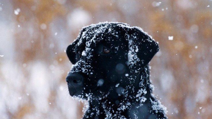 Výstraha meteorologů: Od pondělí začíná sněžit, napadne až 20 cm!