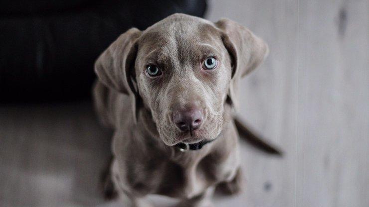 Bizarní jev: Po Rusku běhají zelení, modří a růžoví psi. Podle vědců jsou zdraví