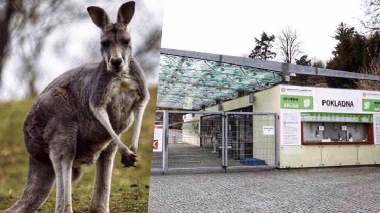 Zoo Praha slaví 90 let: Vydává k tomu Trojské tolary s oblíbenými zvířaty