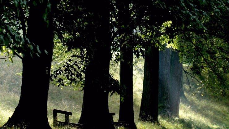 Dnem stromů si svět od poloviny 19. století připomíná plíce planety