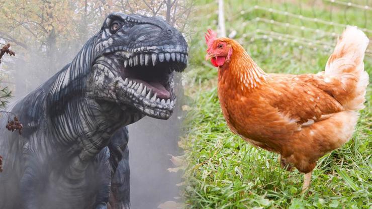 Předek T-Rexe byl velký asi jako dnešní slepice