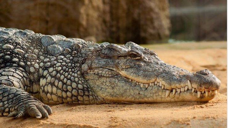 V Ostravě utekl nebezpečný krokodýl! Má velký hlad, varuje policie