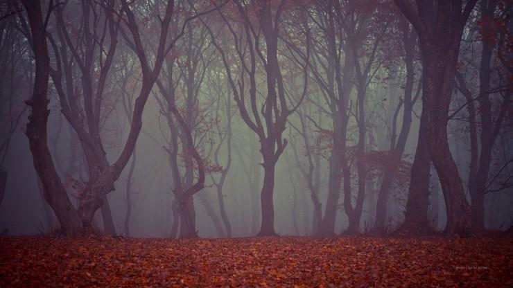 Rumunský les hrůzy: V Hoia-Baciu se ztrácejí lidé a dějí nevysvětlitelné věci